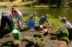 Floating Wetland Hayden Lake Project
